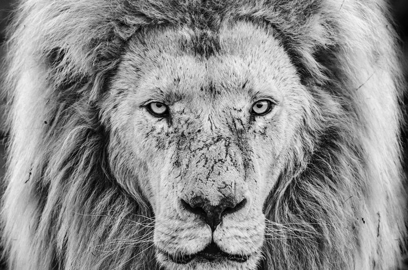 Gandalf - David Yarrow - Leonhard's Gallery