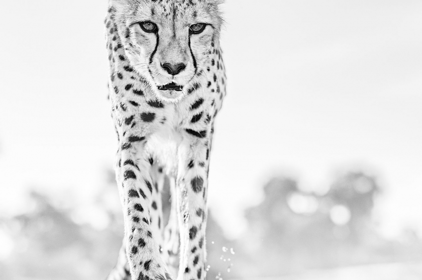 Hot Legs - David Yarrow - Leonhard's Gallery
