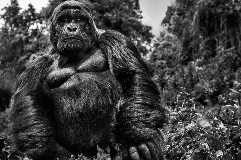 Judge-and-Jury - David Yarrow - Leonhard's Gallery