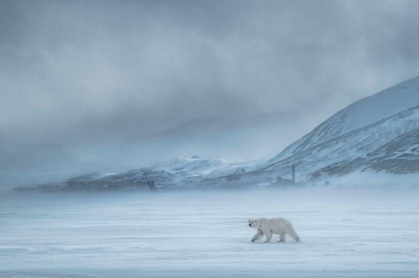 North-of-the-Wall - David Yarrow - Leonhard's Gallery