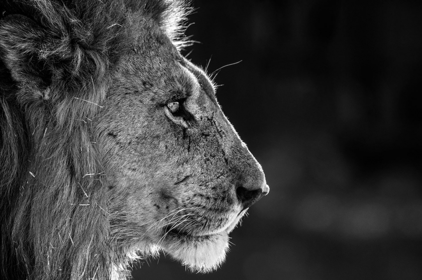 Savute - David Yarrow - Leonhard's Gallery