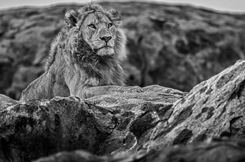 Serengeti - David Yarrow - Leonhard's Gallery