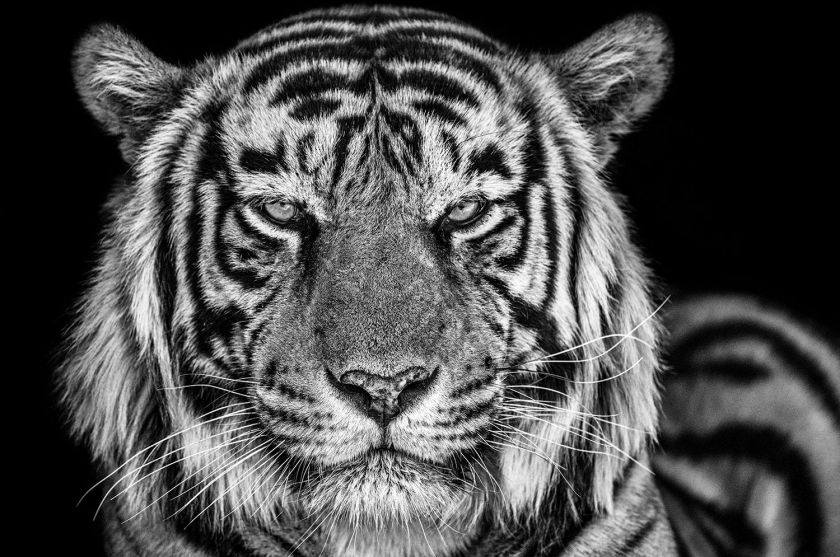 The-Cave - David Yarrow - Leonhard's Gallery