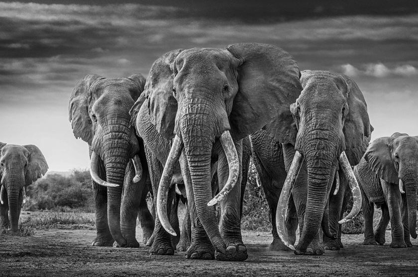The-Mob - David Yarrow - Leonhard's Gallery
