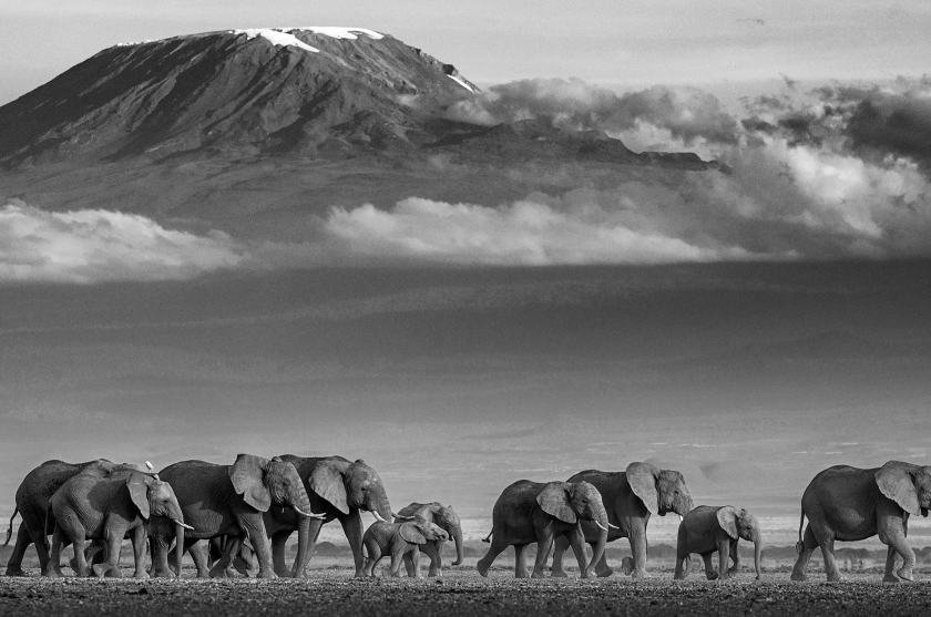 Walk The Line - David Yarrow - Leonhard's Gallery