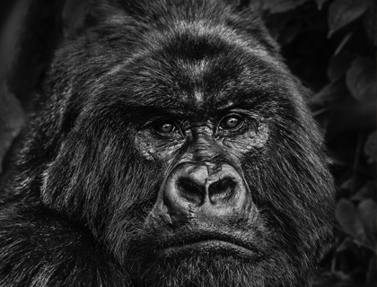 David-Yarrow - Leonhard's Gallery
