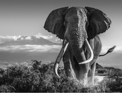 Podcast vol5 - David Yarrow - Leonhard's Gallery