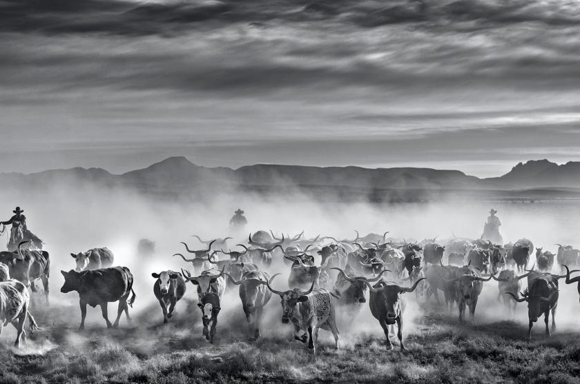 The Thundering Herd - David Yarrow - Leonhard's Gallery