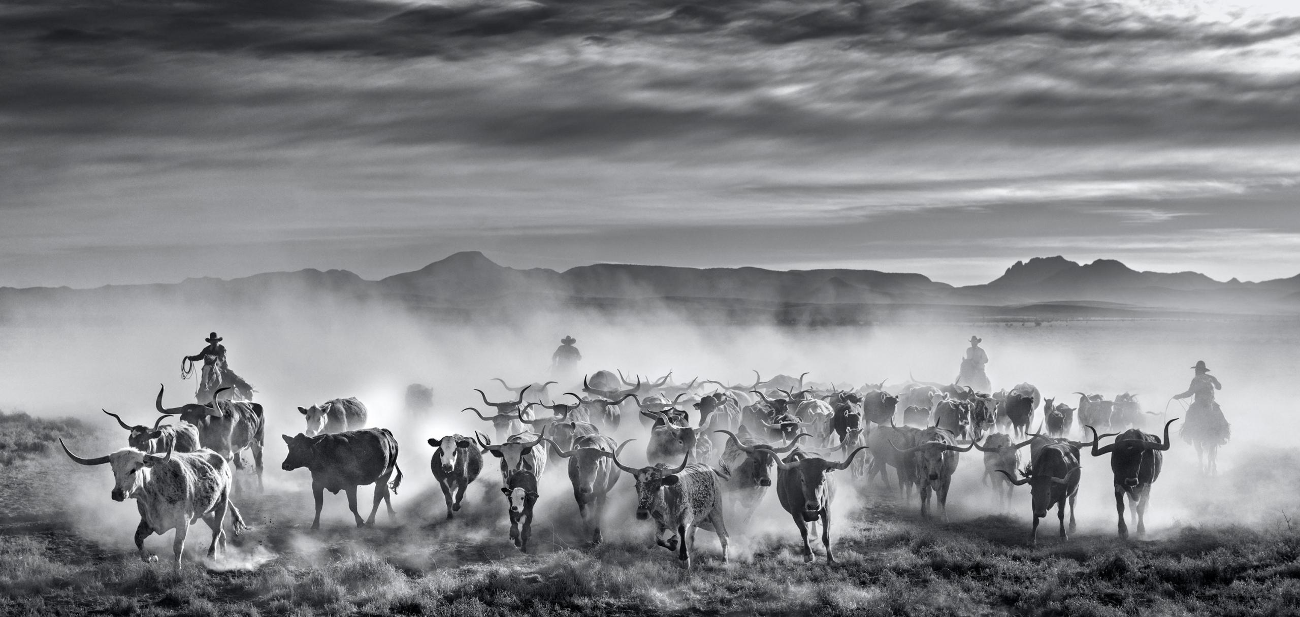 The Thundering Herd Header - David Yarrow - Leonhard's Gallery