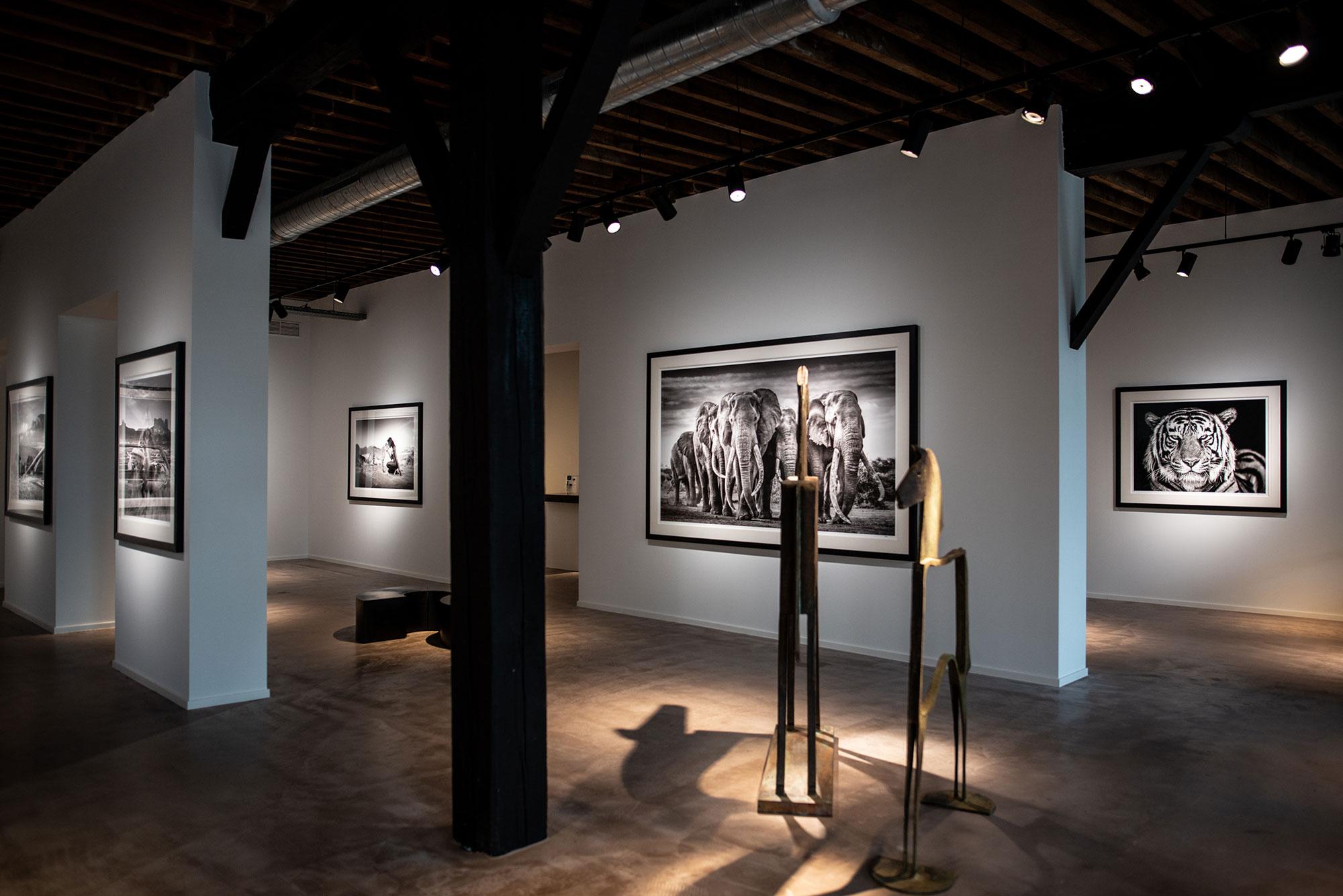 David-Yarrow - Exhibition - Leonhard's Gallery